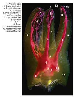 root-t01